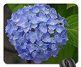 Mauspad Hortensie Blume Natur Garten Blaue Blumen Blüte Gaming Mausmatte Anti Rutsch Gummiunterseite Hochwertiges Gaming Mousepad Multifunktionales Mausunterlage Für Laptop/Pc, 25X30 Cm