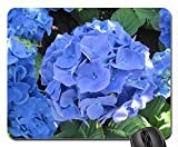 Blaue Hortensien im Garten Mouse Pad, Mousepad (Blumen Mouse Pad)